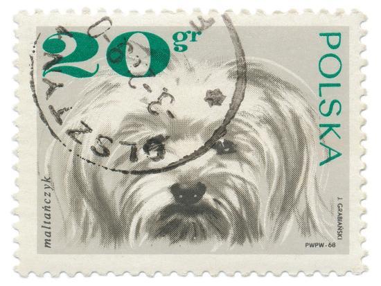 wild-apple-portfolio-poland-stamp-ii-on-white