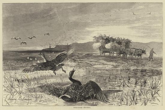 wild-goose-shooting
