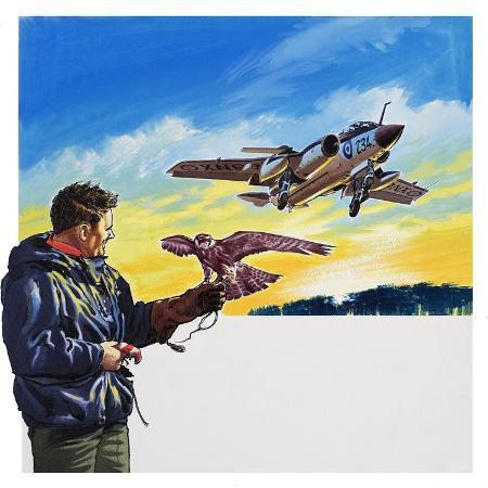 wilf-hardy-falcon-flight