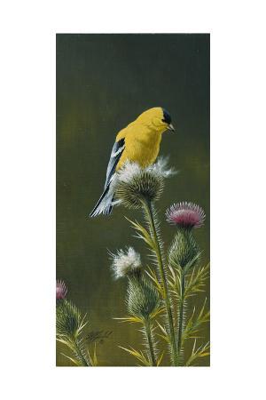 wilhelm-goebel-goldfinch-on-thistle