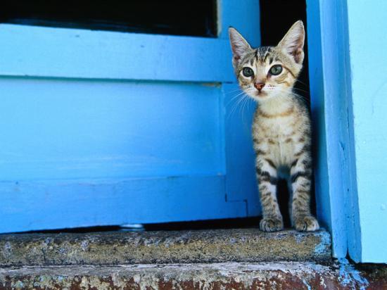 will-salter-kitten-standing-in-doorway-apia-samoa