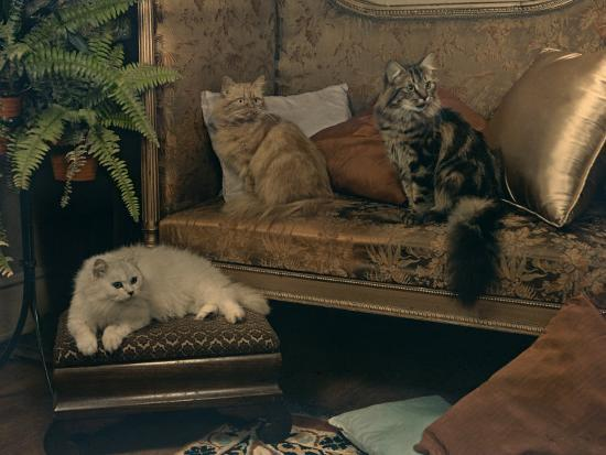 willard-culver-trio-of-persian-cats-recline-on-the-furniture