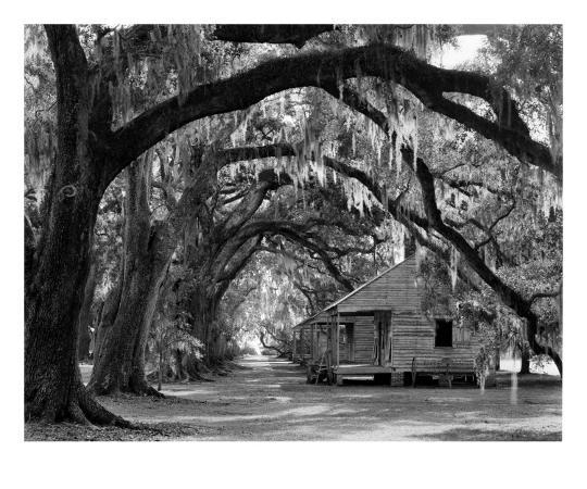 william-guion-evergreen-plantation-oaks-and-cabins