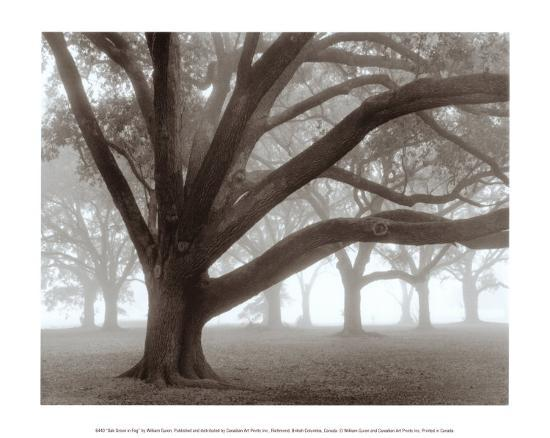 william-guion-oak-grove-in-fog
