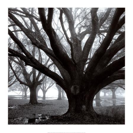 william-guion-oak-grove-winter