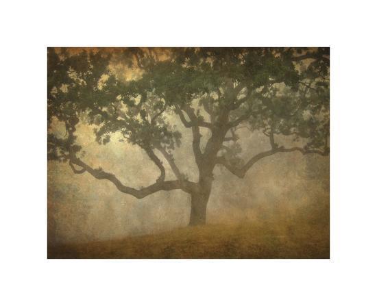 william-guion-oak-in-fog-study-13