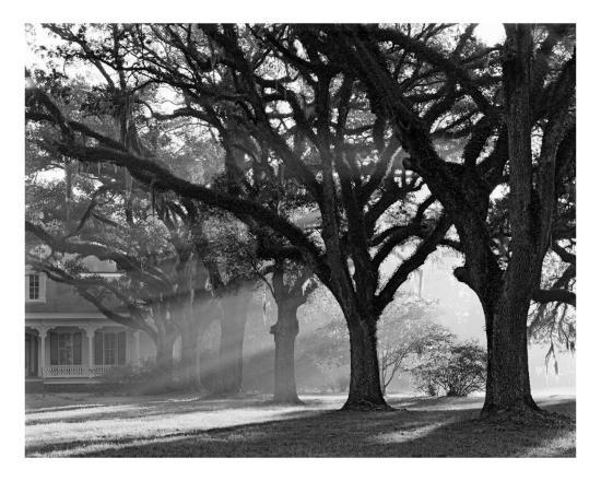 william-guion-the-oaks-plantation-oak-alley-morning-light