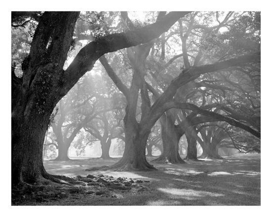 william-guion-west-corridor-morning-light-oak-alley-plantation