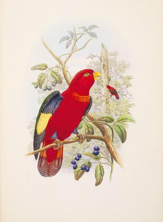 william-hart-lorius-tibialis