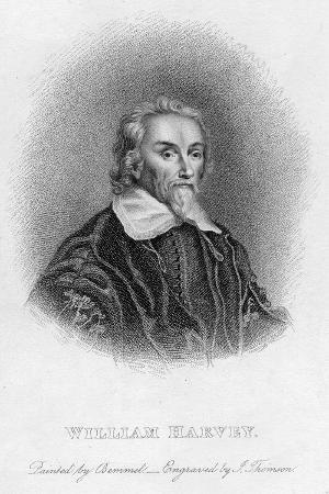 william-harvey-1578-165-english-physician-c17th-century