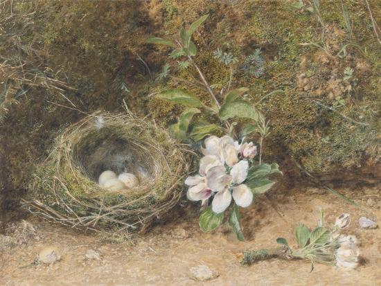 william-henry-hunt-bird-s-nest-with-sprays-of-apple-blossoms