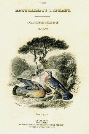 william-home-lizars-the-naturalist-s-library-ornithology-vol-v-ring-pigeon-c1833-1865
