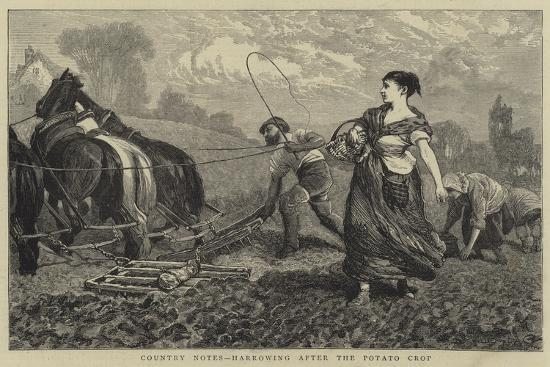 william-iii-bromley-country-notes-harrowing-after-the-potato-crop