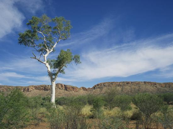 wilson-ken-landscape-in-the-west-macdonnell-ranges-near-alice-springs-in-the-northern-territory-australia