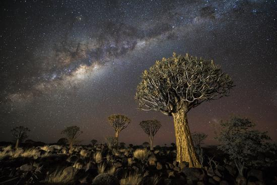 wim-van-den-heever-quiver-tree-forest-aloe-dichotoma-at-night-with-stars-and-the-milky-way-keetmanshoop-namibia