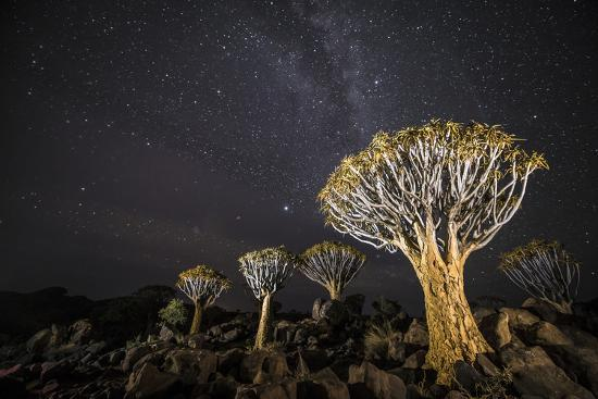 wim-van-den-heever-quiver-trees-aloe-dichotoma-with-the-milky-way-at-night-keetmanshoop-namibia