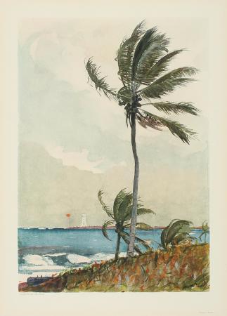 winslow-homer-palm-tree-nassau
