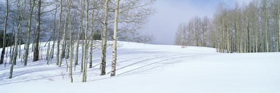 winter-scene-colorado