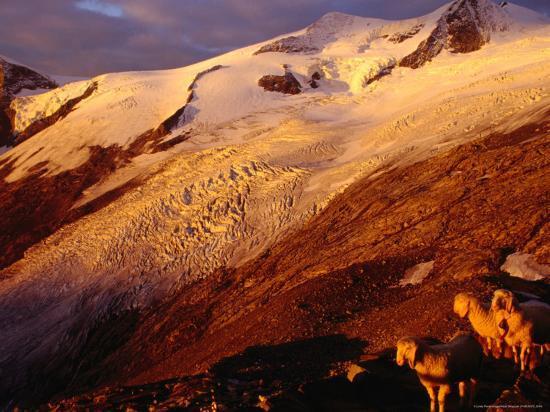 witold-skrypczak-schlaten-glacier-grossvenediger-mountain-from-neue-prager-hut-hohe-tauren-national-park-austria
