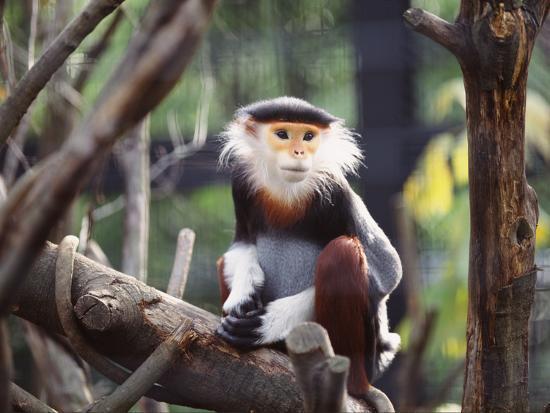 wizdata-monkey