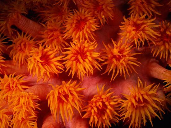 wolcott-henry-a-close-view-of-flower-like-coral-polyps