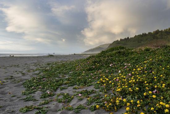 wollertz-california-coast