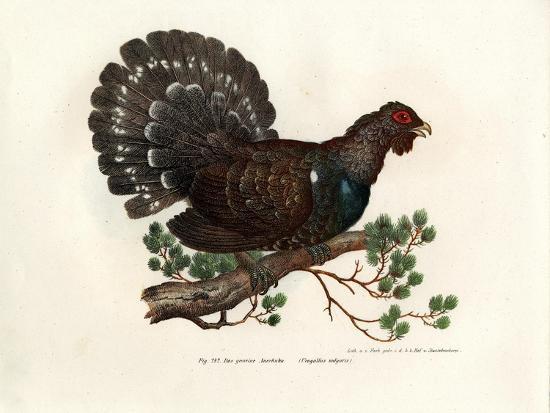 wood-grouse-1864