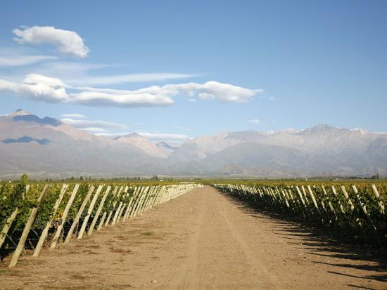 yadid-levy-vineyards-and-the-andes-mountains-in-lujan-de-cuyo-mendoza-argentina-south-america