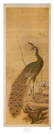 yanagisawa-kien-peacock