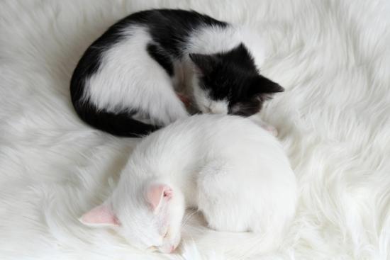 yastremska-two-sleeping-little-kitten-on-white-carpet