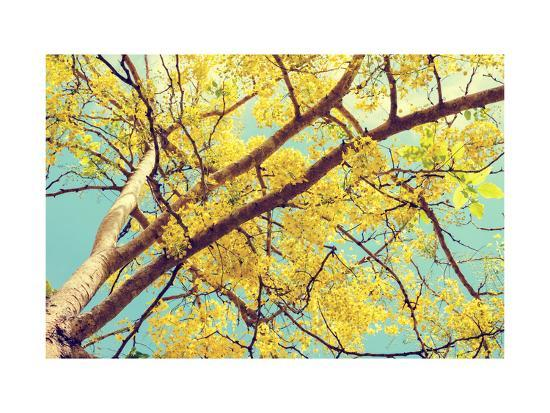 yongkiet-vintage-style-hight-up-beautiful-yellow-flowers-on-tree-of-purging-cassia-or-ratchaphruek-cassis