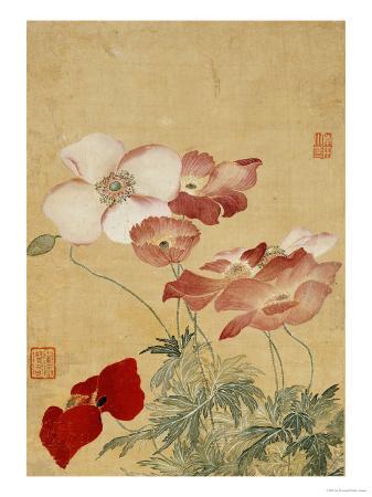 yun-shouping-poppies