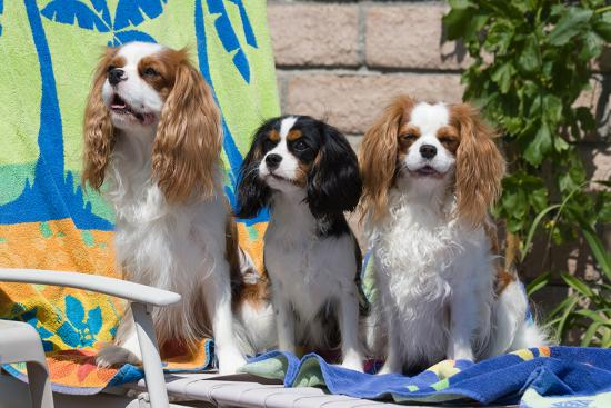 zandria-muench-beraldo-cavaliers-at-a-pool-party