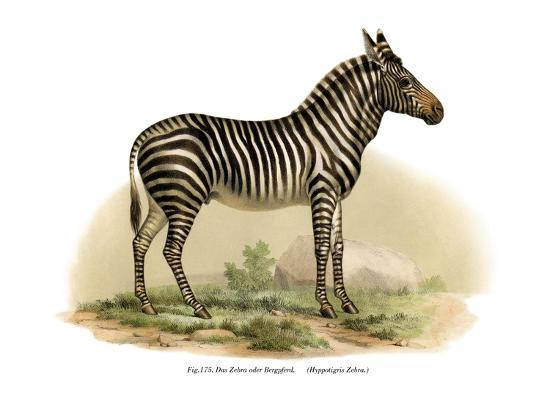 zebra-1860