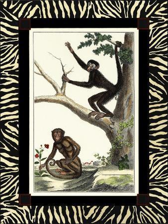 zebra-border-monkey-i