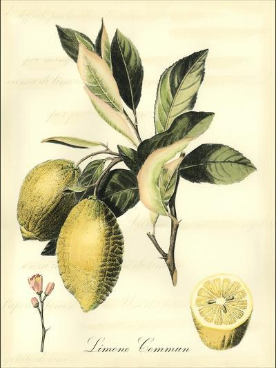 Printed Tuscan Fruits II-Vision Studio-Art Print