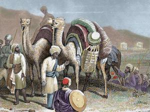 Silk Road, Caravan of Camels Resting, Antioch by Prisma Archivo
