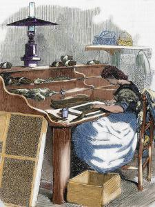The Snuff Industry, Woman Rolling Cigars, France, 1885 by Prisma Archivo