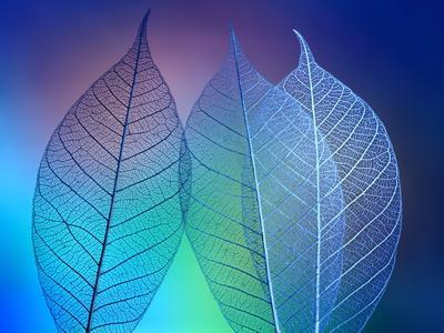 https://imgc.artprintimages.com/img/print/prismatic-leafs_u-l-q1gcy530.jpg?p=0