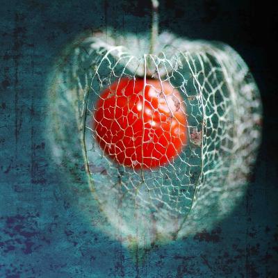 Prison of Love-Philippe Sainte-Laudy-Photographic Print