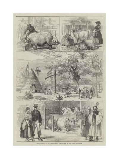 Prize Animals at the International Cattle Show of the Vienna Exhibition--Giclee Print