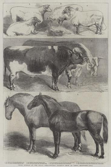 Prize Animals at the Royal Agricultural Society's Show at Leeds-Harrison William Weir-Giclee Print