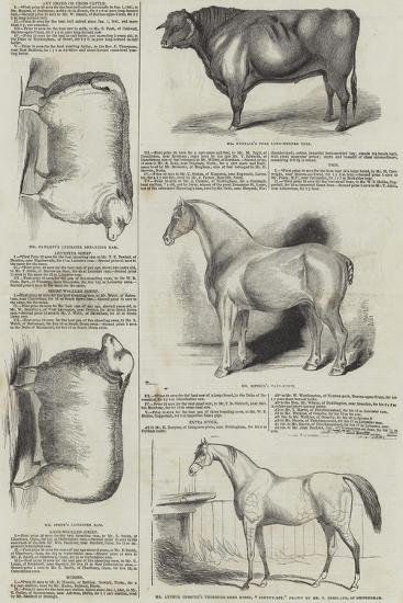 Prize Animals at the Royal Society of England Meeting at Derby--Giclee Print