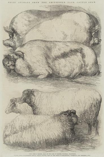 Prize Animals from the Smithfield Club Cattle Show-Harrison William Weir-Giclee Print