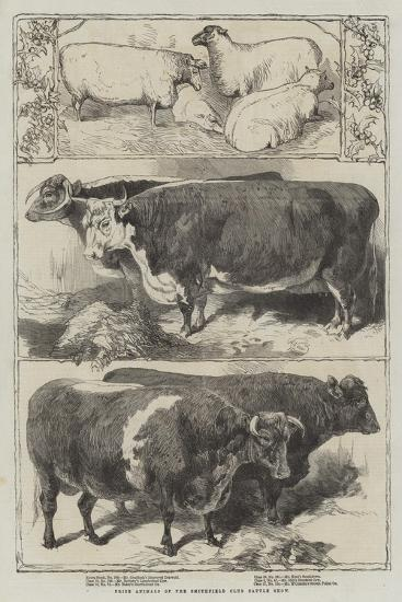 Prize Animals of the Smithfield Club Cattle Show-Harrison William Weir-Giclee Print