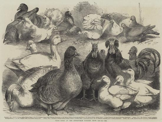 Prize Birds at the Birmingham Poultry Show-Harrison William Weir-Giclee Print