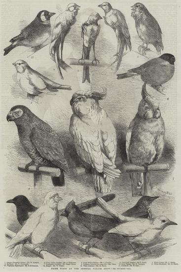 Prize Birds at the Crystal Palace Show-Harrison William Weir-Giclee Print