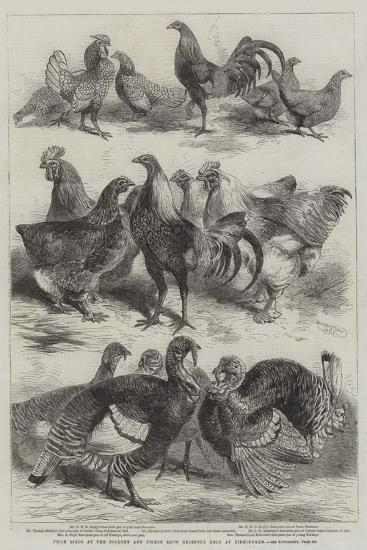 Prize Birds at the Poultry and Pigeon Show Recently Held at Birmingham-Harrison William Weir-Giclee Print