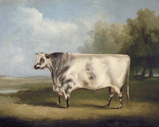Prize Bull-W.A. Davis-Giclee Print