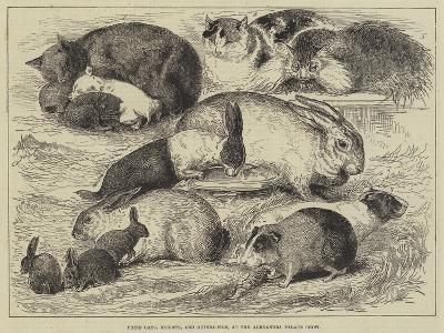Prize Cats, Rabbits, and Guinea-Pigs, at the Alexandra Palace Show--Giclee Print